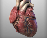 【閲覧注意】バイク事故で即死した男性から飛び出した心臓が...まだ動いている...