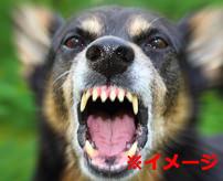 【閲覧注意】悲惨過ぎる...犬に首を噛みちぎられ大量出血で苦しむ女性...