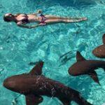 【衝撃】新婚旅行先のカリブ海で泳いでいたらサメに襲われパニック!