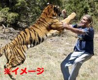 ライオン飼育エリアに侵入したおじいちゃん、あの世に連れて行かれる