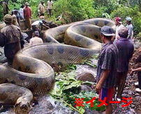 日本→クマ ブラジル→巨大殺人アナコンダ 罠にかかった獲物がヤバすぎた件