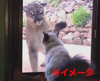 猫が行方不明、路上に血の跡…監視カメラを見てみると…
