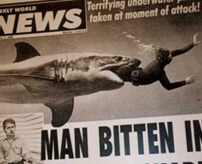 存命ならラッキー、海でサメに襲われるとこうなる
