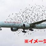 飛行中の旅客機が鳥の大群にエンカウントした結果…