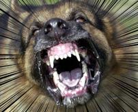 大型の猟犬×3が現れた!どうする? → 車泥棒は無残にもやられてしまった…