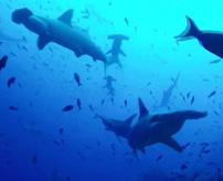 【怖い画像】これにブルっと来たら海洋恐怖症かも?想像すると怖いけど癖になる海の写真&動画