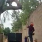木を切っている男性、7秒後…顔に大穴が空く