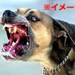 ヒエッ…生きたまま犬に股間の棒と玉を喰われる最悪な拷問がコレ…