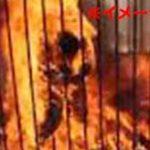 死に至るまでの苦しみは最高レベル…極悪非道の麻薬カルテルにより焼き殺された捕虜の処刑映像…