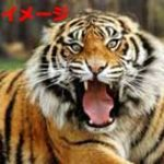 何故か動物園でトラのエリアに侵入した男→当然襲われてしまい入院コースへ…