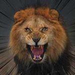不用意にライオンが入っているオリに近づくおバカさんはこうなります…