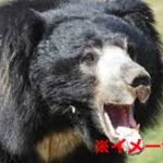 野生のクマに殺された男性の顔面が崩壊しすぎてヤバイ…
