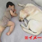 赤ちゃんと飼い犬を一緒に寝かせていたらとんでもないことになった…