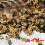 超大量のミツバチに全身を刺されまくって死亡した女性の遺体が衝撃的な件…