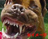 狂犬に襲われた女の子のビフォーアフターがヤバすぎる…