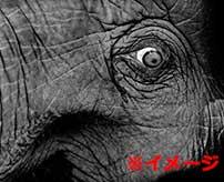 絶対に象をキレさせてはいけない理由がコチラ…