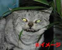 孤独死した後に飼い猫に喰われてしまった人間の死体がキツイ…