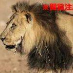目の前で自分の身体をライオンがムシャムシャ食べている恐怖…
