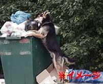 【閲覧注意】野良犬がとんでもないもの食べてて絶句した…