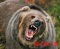 500kgのクマに襲われてしまった男性が信じられない姿で発見された…