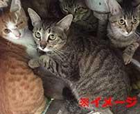 たくさんの猫を飼っていた男性の孤独死体がかなりヤバイ…