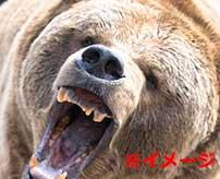 野生のクマに襲われて頭皮を剥がされてしまった男性…