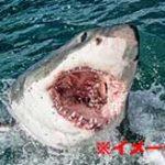 ホオジロザメに食い殺されて打ち上げられた男性の死体が無惨だった…